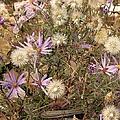 Flower Gc Two by Douglas Settle