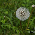 Flower by Giovanni Chianese