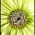 Flower Green by Michele Monk