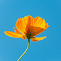 Flower - Growing Up In Brooklyn by Mike Savad