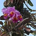 Flower In A Tree by Dick Willis