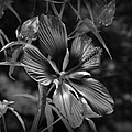 Flower In B-w by Beth Vincent