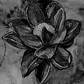 Flower In Black And White by Kathy Carothers