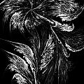 Flower In Black-and-white by Klara Acel