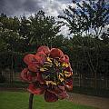 Flower In Bloom by Tim Childers