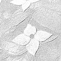 Flower In Pencil by Douglas Settle