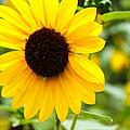 Flower In The Sun by Elijah Gomez