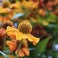 Flower by Lali Kacharava
