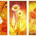 Flower Love Triptic by Mo T