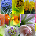 Flower Macro Photography by Juergen Roth