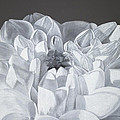 Flower by Maria Bozina