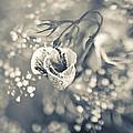 Flower by Mark-Meir Paluksht