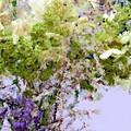 Flower Market Ile De La Cite by RC DeWinter