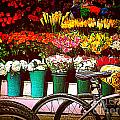 Flower Market With Bike by Miriam Danar