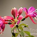 Flower by Nila D