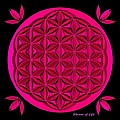 Flower Of Life - Pink by David Voutsinas