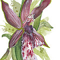 Flower Orchid 10 Elena Yakubovich by Elena Yakubovich
