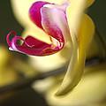 Flower-orchid-yellow by Joy Watson