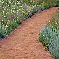 Flower Path by George Tuffy