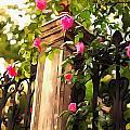 Flower Post by Catherine Lott