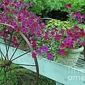 Flower Pot 2 by Allen Beatty
