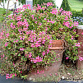 Flower Pot 2 by Barbara Snyder