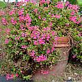Flower Pot by Barbara Snyder