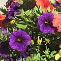 Flower Pot Close Up by Anita Burgermeister
