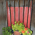 Flower Pots by Barbara Snyder