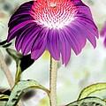 Flower Power 1357 by Pamela Critchlow
