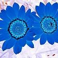 Flower Power 1427 by Pamela Critchlow