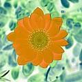 Flower Power 1433 by Pamela Critchlow