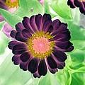 Flower Power 1435 by Pamela Critchlow