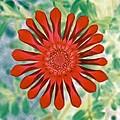 Flower Power 1438 by Pamela Critchlow