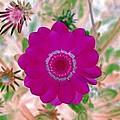 Flower Power 1439 by Pamela Critchlow