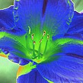 Flower Power 1443 by Pamela Critchlow
