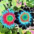 Flower Power 1449 by Pamela Critchlow