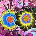 Flower Power 1453 by Pamela Critchlow