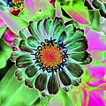 Flower Power 1454 by Pamela Critchlow