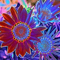 Flower Power 1455 by Pamela Critchlow