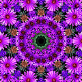Flower Power by Kristie  Bonnewell