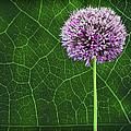 Flower Power by Penny Pesaturo