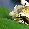 Flower Rise Over Beetle by Douglas Barnett