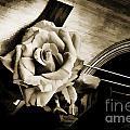 Flower Rose Bloom On Guitar Painting In Sepia 3264.01 by M K Miller