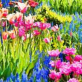 Flower Splash II by Tina Baxter