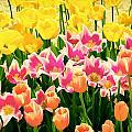 Flower Splash Ix by Tina Baxter