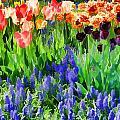 Flower Splash V by Tina Baxter
