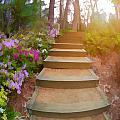 Flower Steps by Tina Baxter