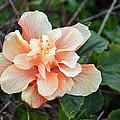 Flower by Steven Miller