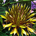 Flower - Sultry Dahlia - Luther Fine Art by Luther Fine Art